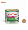 PATE ROYAL CANIN - MINI JUNIOR