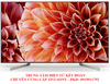 Tivi Smart Sony 65X9000F - 65 Inch, 4K Ultra HD (3840 X 2160px)